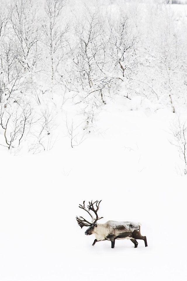 through the snow