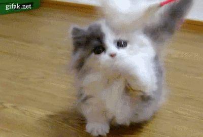 cuki kiskutyák gif