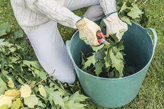 Rien ne vaut le fait maison et il est facile de faire ses propres engrais naturels, surtout sous forme liquide. Ces engrais bio seront à diluer et nourriront toutes vos plantes, depuis les plantes d'intérieur jusqu'aux légumes et plantes à fleurs, et même les plantes en pot. Outre les économies qu'ils vous font réaliser, ces engrais naturelsont l'avantage de se conserver longtemps, presque indéfiniment après fabrication. Et vous pouvez les préparer toute l'année. Ces engr...