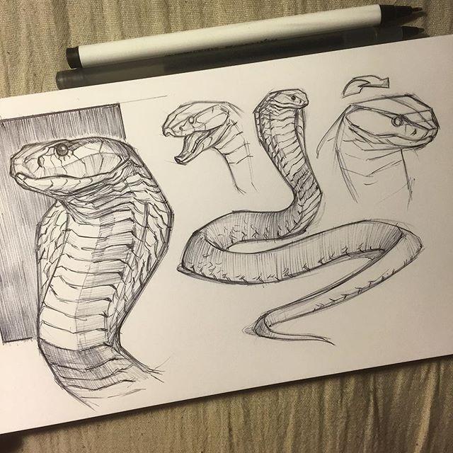 WEBSTA @ jonnadon1 - Cobra sketch before heading to bed #cottonwoodarts #sketchbook #sketch #animal #animaldrawing #animalsketch #reptiles  #snake #snakes #cobra #jonathankuo #jonnadon1#inktober #inktober2016