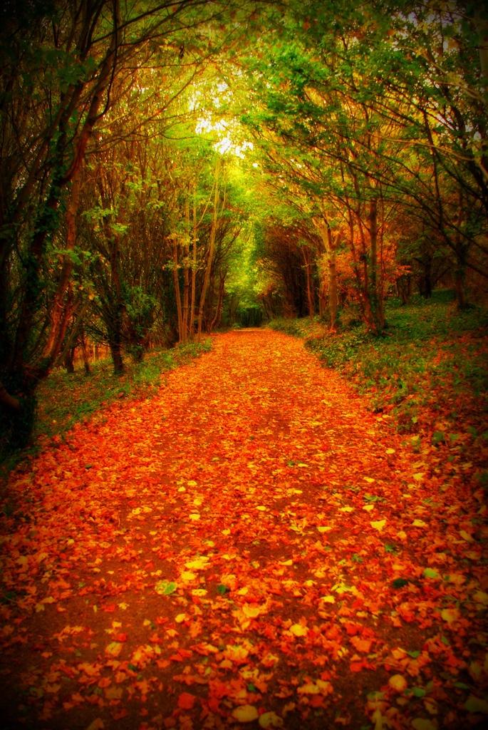 Een herfstig paadje in het bos! #ECOstyle #herfst #boswandeling