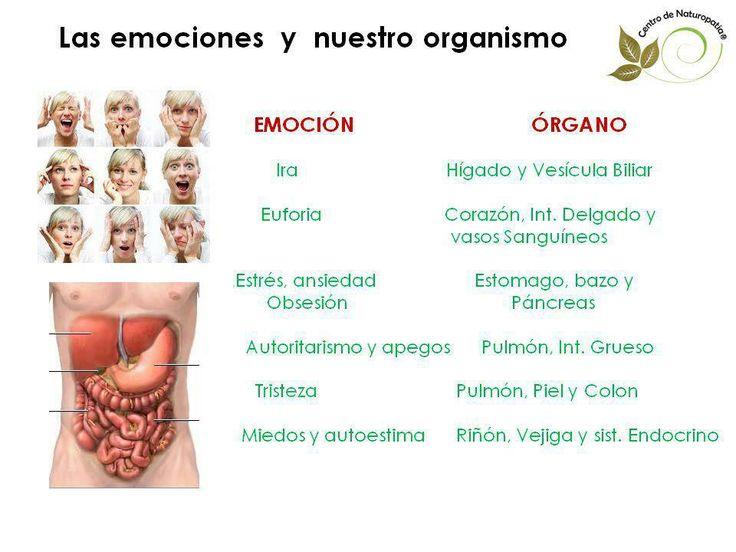 las emociones y nuestro organismo