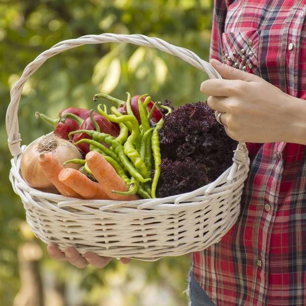 Bio-Lebensmittel günstig einkaufen