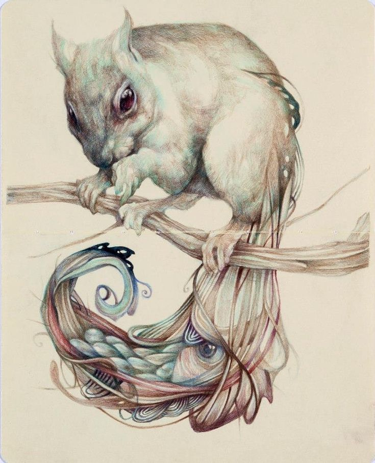 "Marco Mazzoni on Instagram: ""THE CHEMICAL SQUIRREL 2012 #coloredpencils #squirrel #illustration #creature"