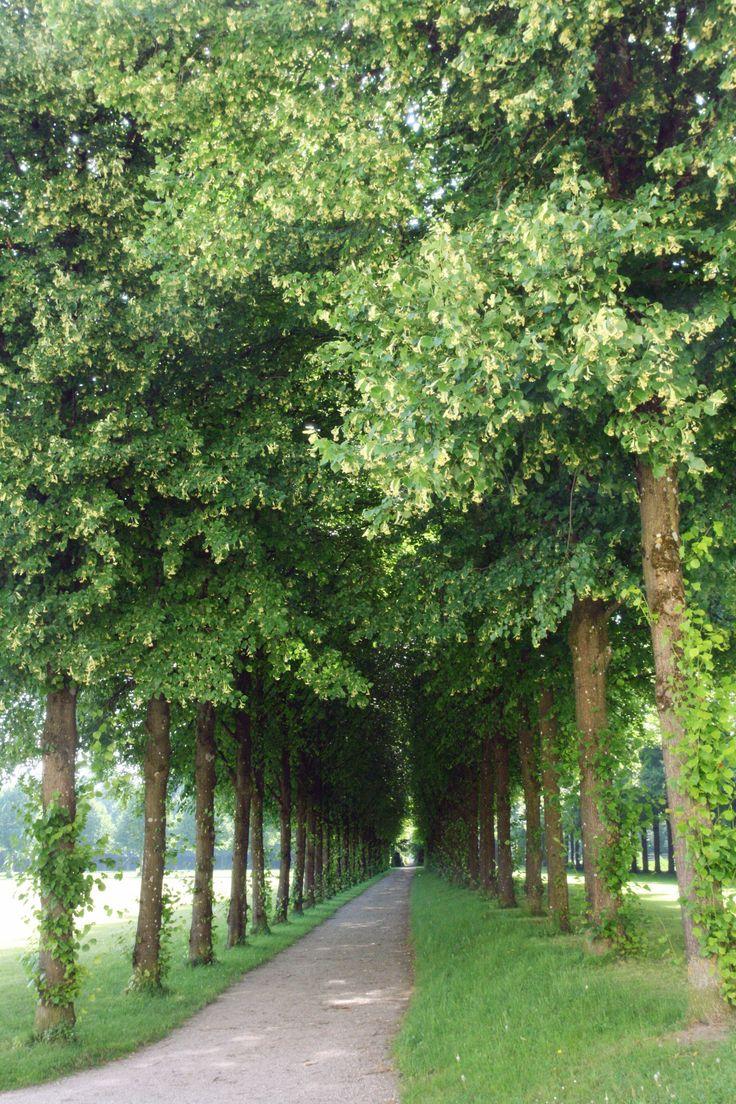 green #fotografia #photography #podróże #travel