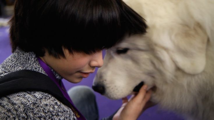 This Boy's Extraordinary Talent Stunned Experts at the National Dog Show