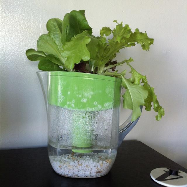 Self watering Brita planter. | Herbs & Vegetable growing