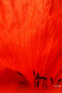 Red | Flickr - Photo Sharing!