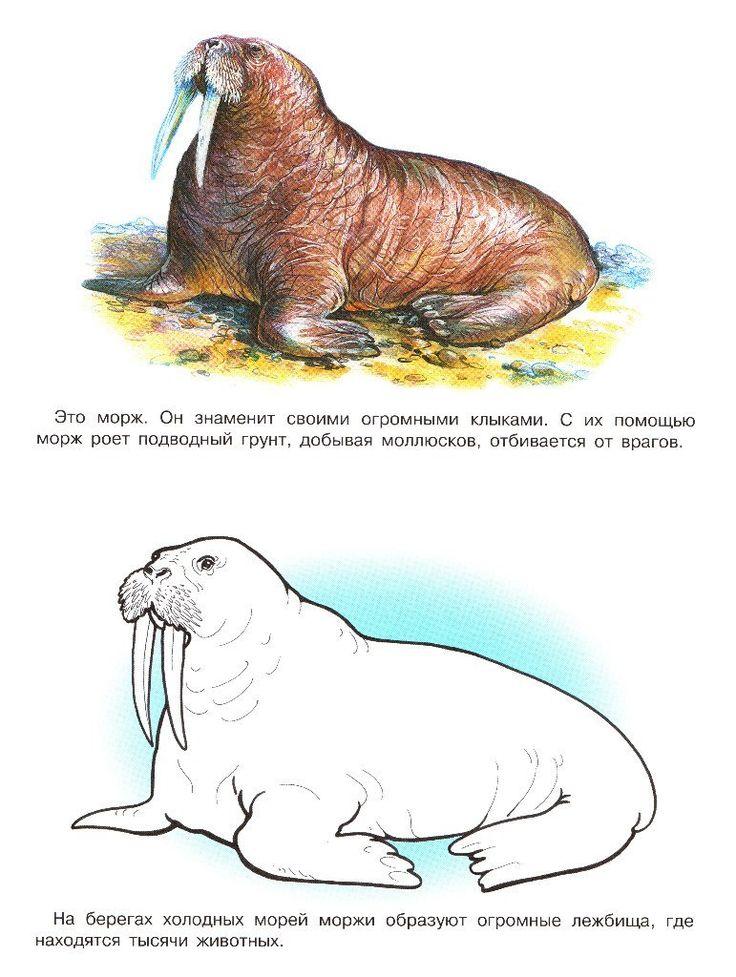 Раскраски с животными | Животные, Раскраски, Раскраски с ...