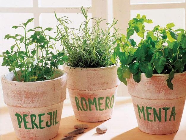 11 errores al sembrar Hierbas aromáticas