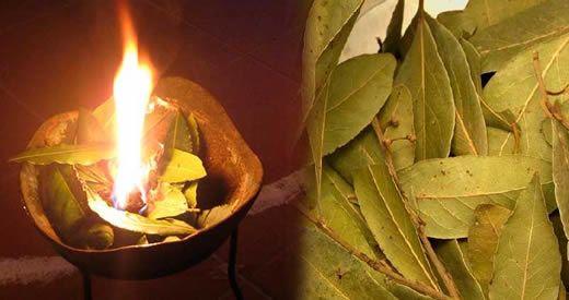 Perché bisogna bruciare una foglia di alloro? Ti sarà sicuramente successo di tornare a casa [Leggi Tutto...]