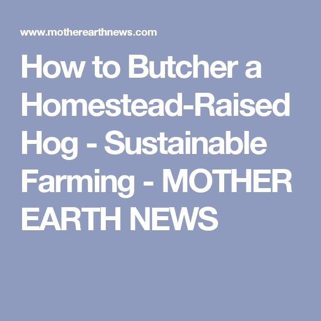 How to Butcher a Homestead-Raised Hog - Sustainable Farming - MOTHER EARTH NEWS