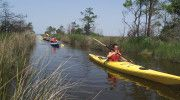 Alligator River Kayak Tour | Kitty Hawk Kites