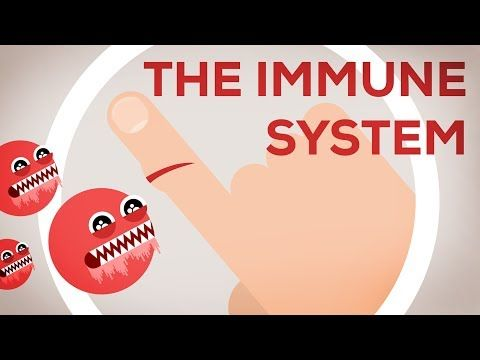 The Immune System Explained I – Bacteria Infection - YouTube