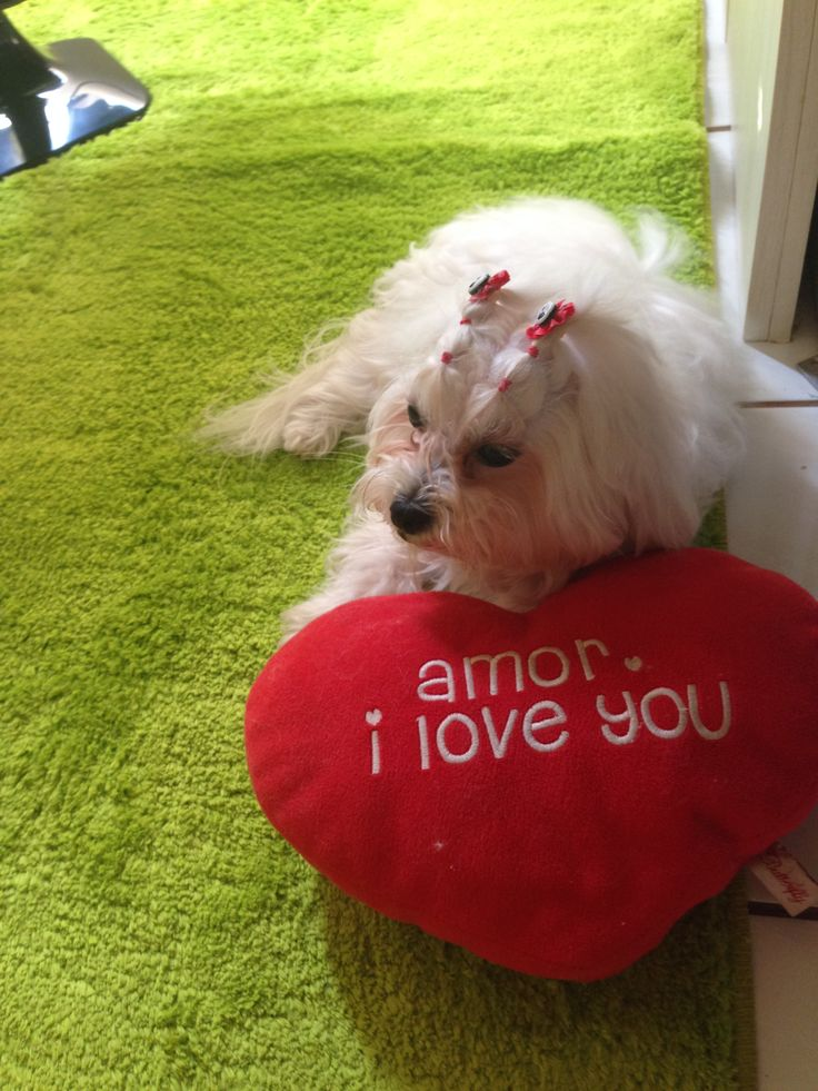 Dona i love you!