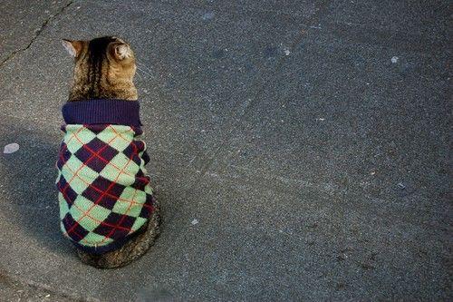 Fancy kitteh: Argyle Sweaters, Dis Sweaters, Pet, Jumpers, Kitty Kitty, Cat Sweaters, Cat Lady, Sweaters Vest, Animal