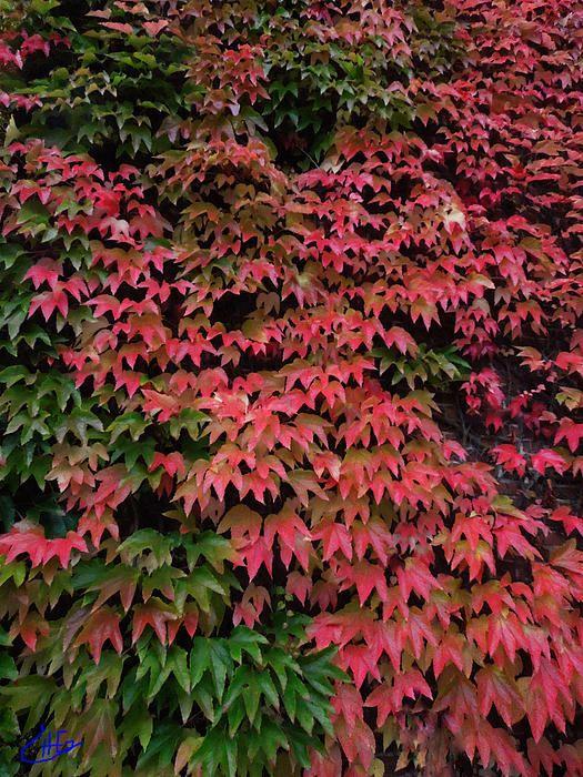 Autumn Coliur Change .Photography Colette H . Guggenheim