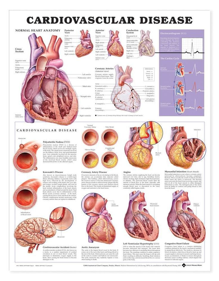 26 best images about body systems/diseases on pinterest, Muscles