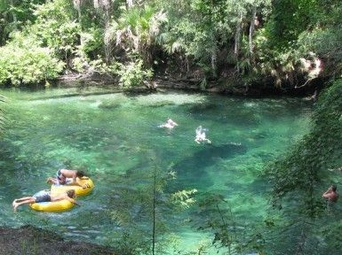 10 Images About Florida Springs On Pinterest Bubble Up Leon And Natural