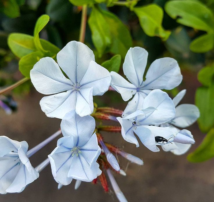 Stunning little garden scene in the gardens. #flowers #beetle #insects #garden #home #jasmin
