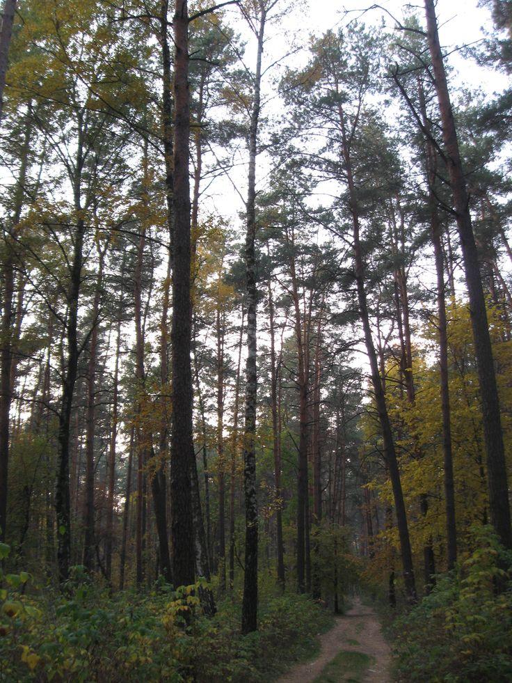 Черниговский лес