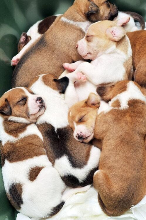 Dog puppies. So cute!