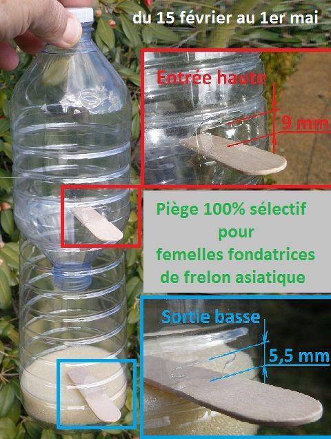 Piège 100% sélectif Il est équipé d'un dispositif de limitation en taille à l'entrée (9mm) : les femelles fondatrices de «vespa crabro» (frelon européen) et les papillons sont attirés mais ne peuvent pas entrer. Un dispositif de limitation en taille à la sortie (5 à 6 mm) retient la femelle fondatrice «vespa velutina«, elle ne peut pas ressortir, sauf à remonter la nasse, chose qui peut arriver. Le rond de mousse au fond de la bouteille est à imprégner jusqu'à saturation de l'appât…