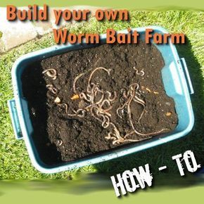 Worms are a great bait for catching fish but buying box after box can add up to a lot of wasted money. This will be a step by step easy to follow guide that will show you how to make your own worm farm.