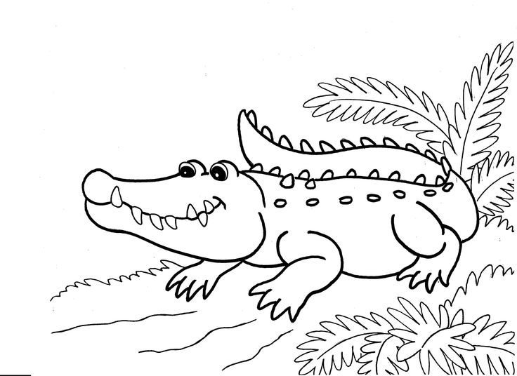 crocidile coloring pages for kids | 31 best images about Reptiles on Pinterest | Funny ...