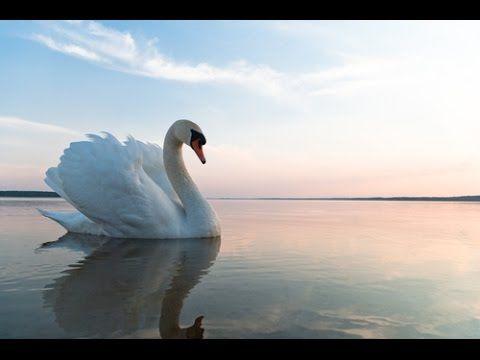 "Hans Christian Andersen ""Brzydkie kaczątko"""