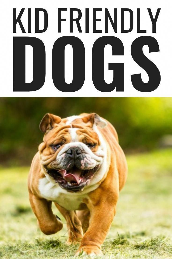 Guide And Help For Dogs Training And Nutrition Do You Wish To