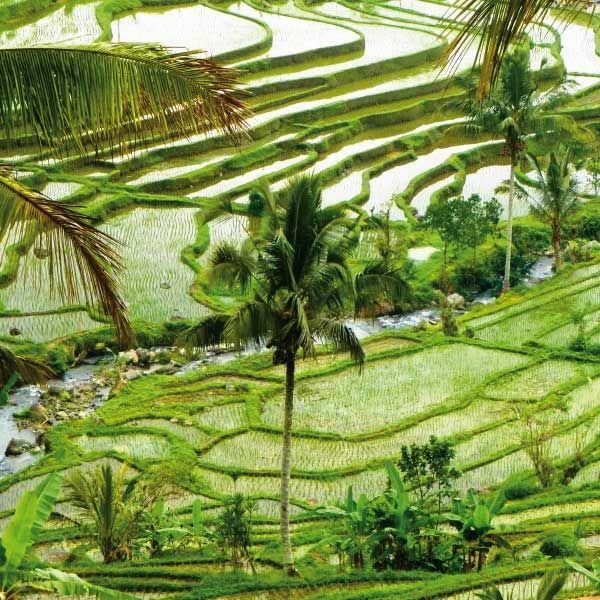 Die Giri Reisterrassen auf Bali