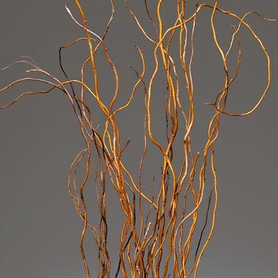 Curly willow -linear foliage 1