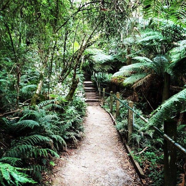 Best walks in Melbourne j'ai monté les 1000 marches ouf... Pour Liam et Sophie cela semblait facile même que Liam à compter les marches...