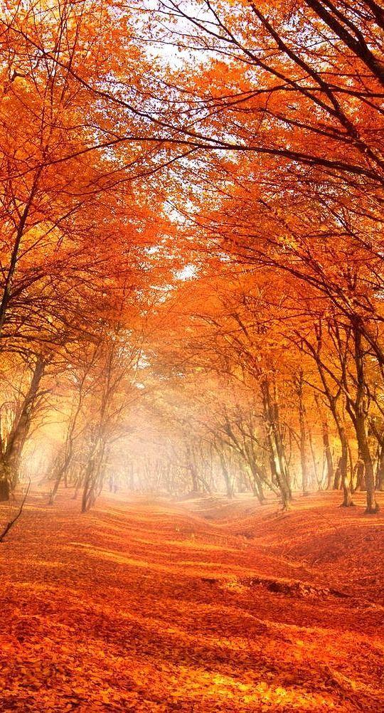 "bellasecretgarden: "" Autumn Trees """