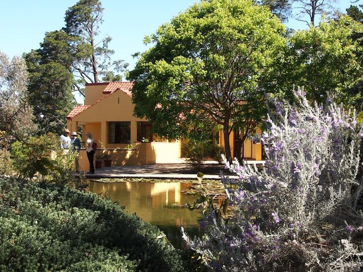 21 best Walcott native garden Canberra images on Pinterest
