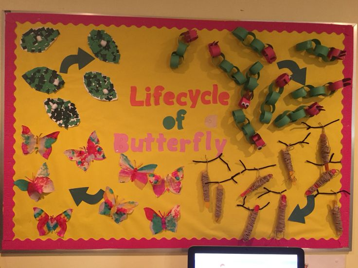 Lifecycle of a butterfly bulliten board