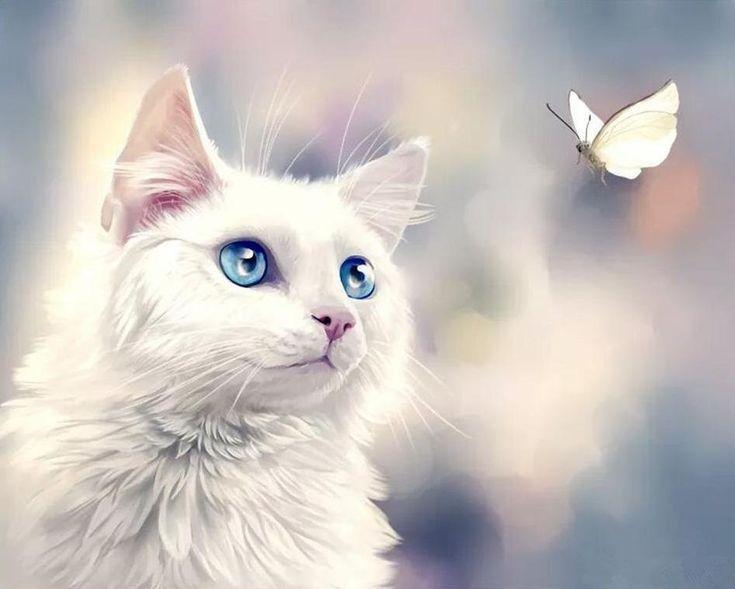 картинки аватарки белый кот данной статье раскрыты