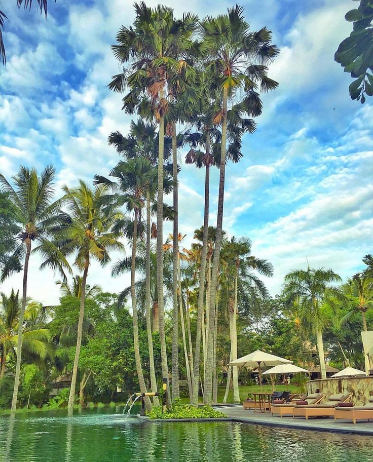 The Ubud Village Resort and Spa - Bali  Credits @ellchintya by beaches_n_resorts