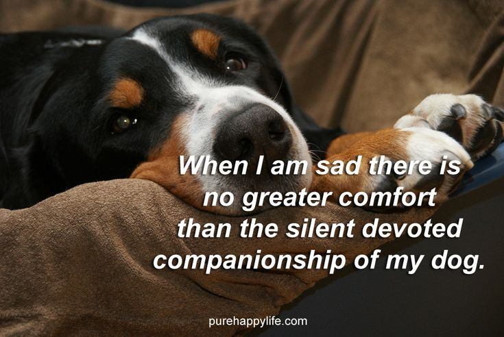 #quotes more on purehappylife.com - When I am sad there is no greater...