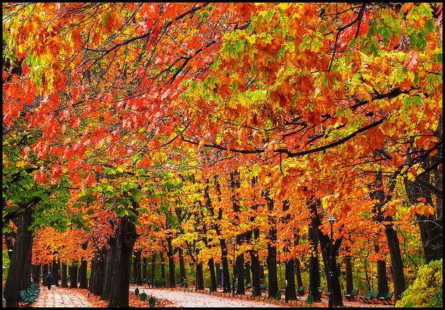Amazing foliage in Bucuresti, Romania.