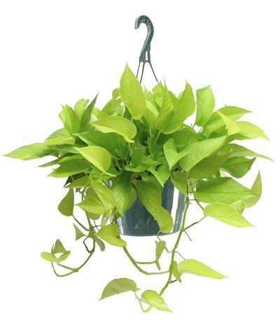 100 Best Vertical Garden Plant Suggestions Images On Pinterest