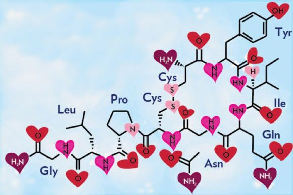 Love Hormone Oxytocin Can Cause Emotional Pain, New Study Says [Stylized structural diagram of oxytocin (DARPA).] New research reported in the journal Nature Neuroscience says that oxytocin, a hormone that promotes feelings of love, social bonding and well-being, can cause emotional pain – an entirely new, darker identity for the hormone.