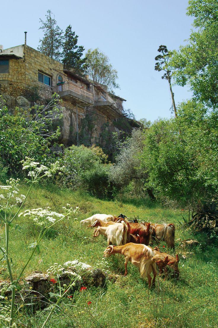 Ein Karem . Israel