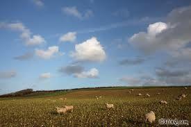 Sheep clouds.