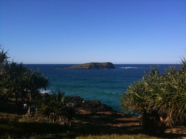Watch the whales from Fingal Head, overlooking Cook Island. Or take a snorkelling tour to see the turtles. Or go scuba diving at Cook Island - there's plenty of gorgeous marine life to see.