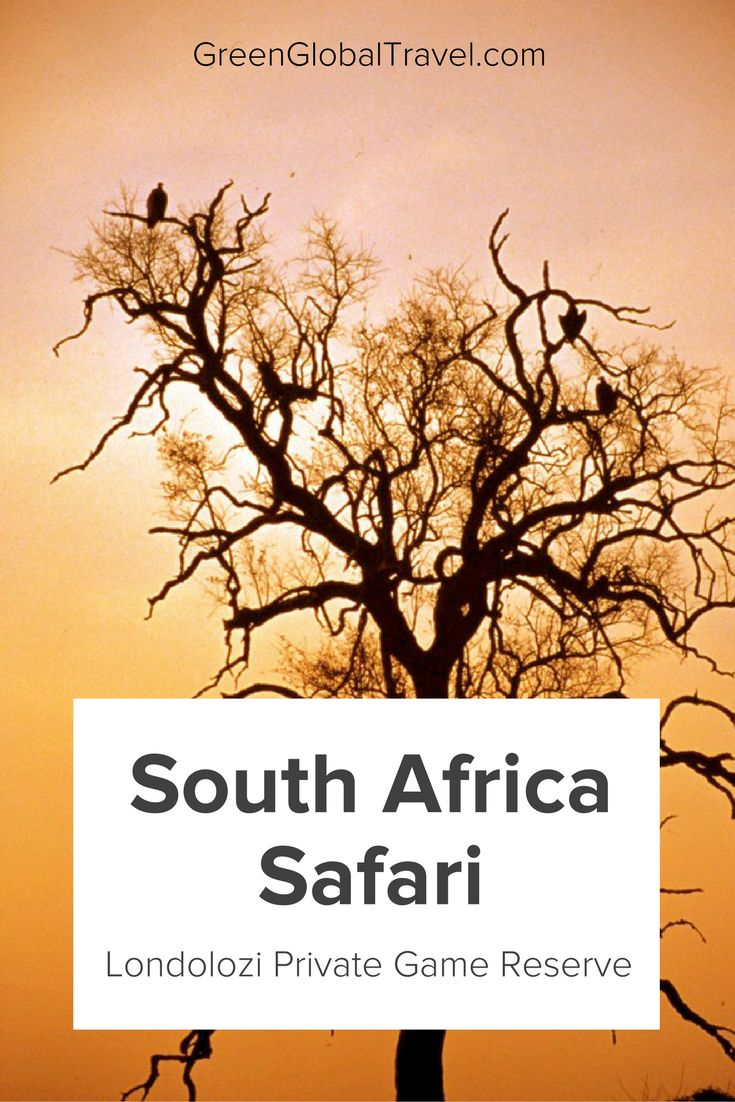 Read about our exciting time in Londolozi Private Game Reserve and about the animals we were able to see, including hippos, an elephant, a leopard, giraffes, and many more. South Africa travel | South Africa safari | South Africa safari Kruger | South Africa safari wildlife - @gree