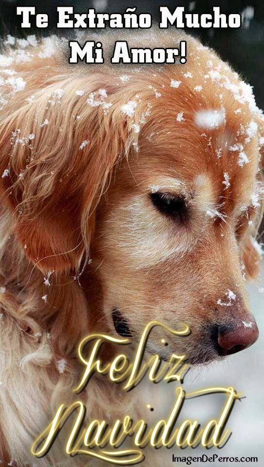 Te Extrano Mi Amor Feliz Navidad Frases Con Msj Pinterest