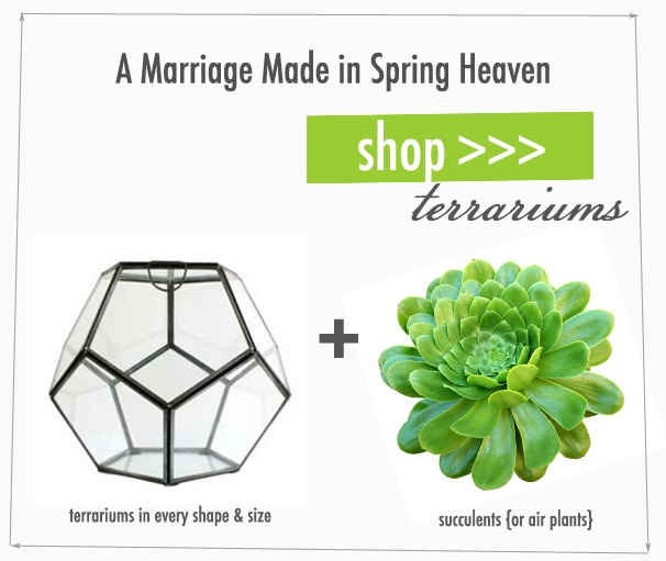 A Marriage Made in Spring Heaven : Terrariums + Succulents