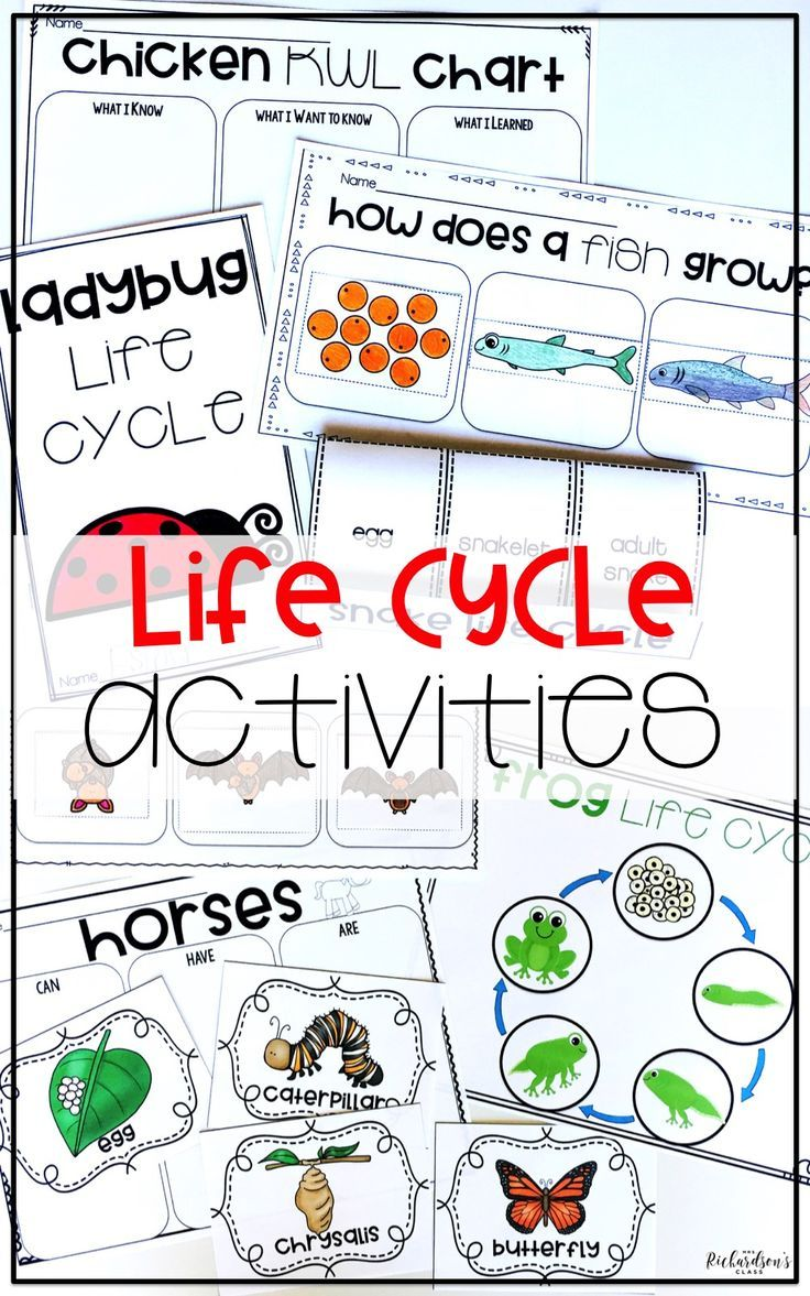 This bundle has everything you need to engage children as they explore and learn about the ladybug life cycle, fish life cycle, chicken life cycle, horse life cycle, butterfly life cycle, frog life cycle, and bat life cycle! Each animal group is covered! These life cycle activities are perfect for kindergarten, first grade, and even second grade students!